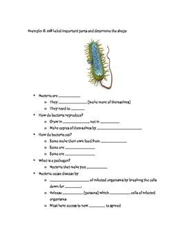 Bacteria Fill In Notes with Key