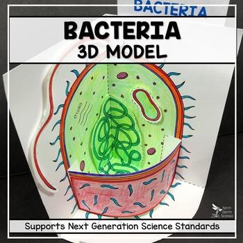 Bacteria Model  - 3D