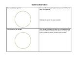 Bacteria Observation Sheet