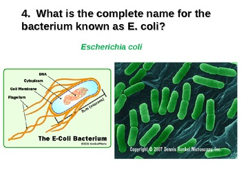 Bacteria Powerpoint