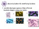 Bacteria Stations