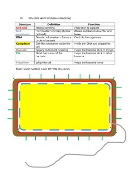 Bacteria Unit Notes