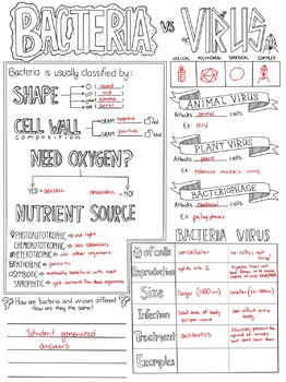Bacteria Vs. Virus Biology Sketch Notes