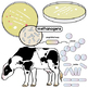 Bacteria and Archaea Clip Art