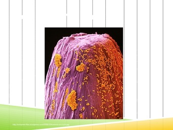 Bacteria and Virus PowerPoint