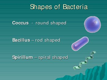 Bacteria and Viruses PowerPoint Presentation Lesson Plan