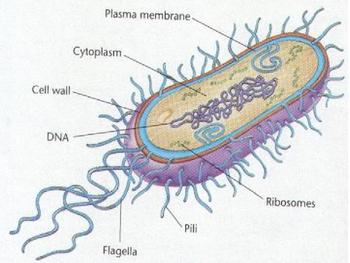 Bacteria and Viruses:  Silent Killers?