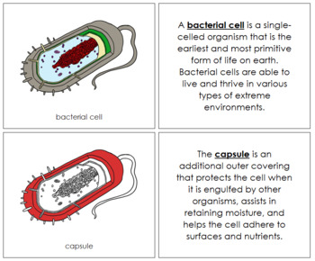 Bacterial Cell Nomenclature Book (Red)