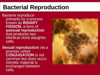 Bacterial Reproduction and Ecological Roles of Bacteria PPT