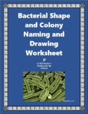 Bacterial Shape and Colony Naming and Drawing Worksheet