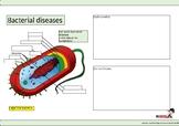 Bacterial diseases worksheet