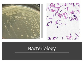 Bacteriology unit notes - powerpoint