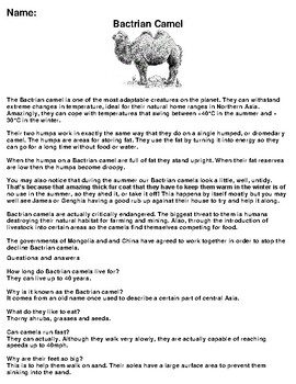 Bactrian Camel Article, Summary and Drawing Assignment