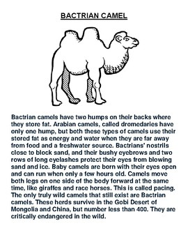 Bactrian Camel Overview and Coloring Worksheet