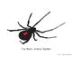 Baddest of the Spider World-The Brown Recluse Spider and T