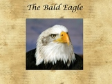 American Symbols- The Bald Eagle PowerPoint
