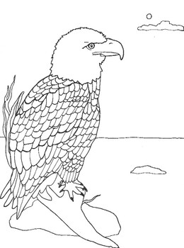 Bald Eagle coloring page. | 350x260