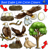 Bald Eagle Life Cycle Clipart