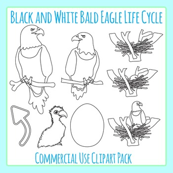 Bald Eagle Life Cycle in Black and White Line Art Clip Art for Commercial Use