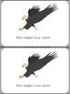 Bald Eagle Mini Books