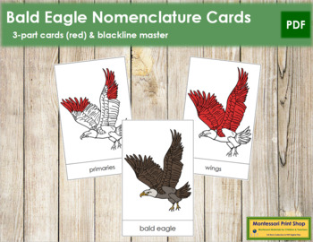 Bald Eagle Nomenclature Cards (Red)