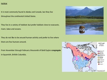 Bald Eagle - Power Point Facts