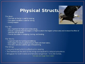 Bald Eagle PowerPoint
