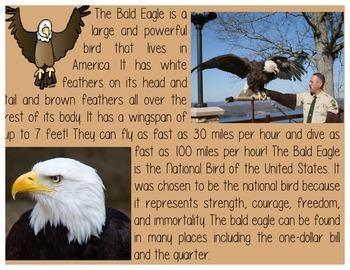 Bald Eagle and American Flag Close Read