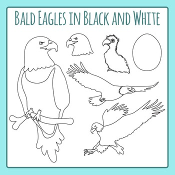 Bald Eagles in Black and White Line Art - Commercial Use Clip Art Set