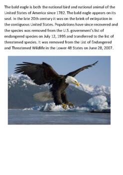 Bald eagle Handout