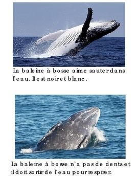 Animal Book -Baleine a Bosse