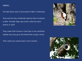 Bali Myna - Bird - Power Point - Facts History Pictures