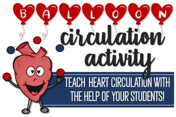 Balloon Circulation Activity- Teach Blood Flow Through the Heart!