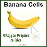 Banana Cells