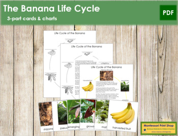 Banana Life Cycle Cards and Charts
