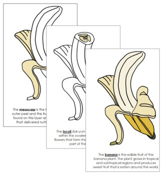 Banana Nomenclature Book