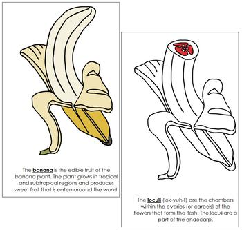 Banana Nomenclature Book - Red