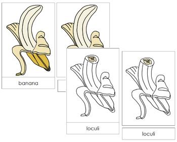 Banana Nomenclature Cards