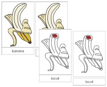 Banana Nomenclature Cards - Red