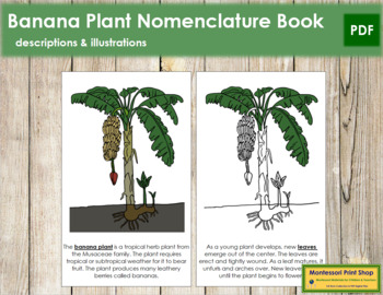 Banana Plant Nomenclature Book