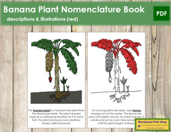 Banana Plant Nomenclature Book - Red