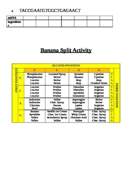 Banana Split Protein Synthesis Lab