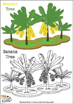 Banana tree coloring pages + Fun questions and facts