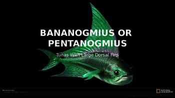 Bananogmius or Pentanogmius