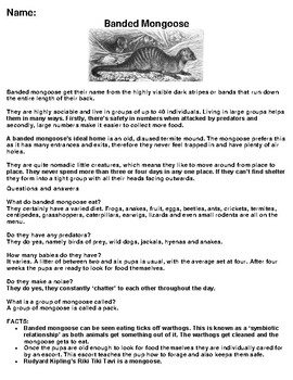 Banded Mongoose Article, Summary and Drawing Assignment
