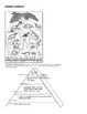 Barn Owl Food Web & Energy Pyramid- works with Owl Pellets ...