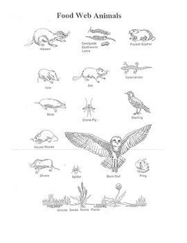 Barn Owl Food Web & Energy Pyramid- works with Owl Pellets ...