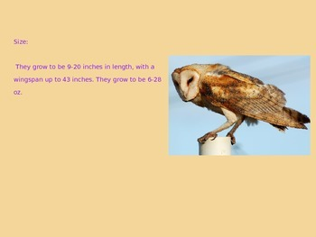 Barn Owl - Power Point - Facts Pictures