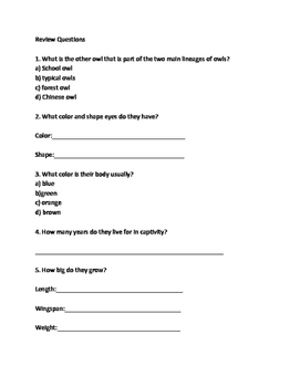 Barn Owl - Review Article Lesson Facts Questions Vocabulary Word Search