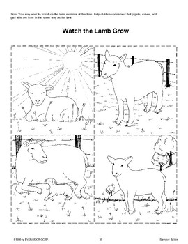 Barnyard Babies Sequences